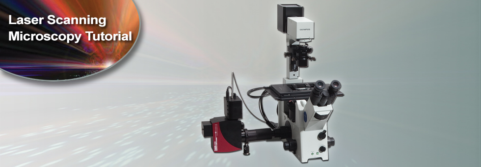 レーザ走査型顕微鏡のチュートリアル