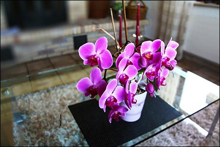 3D Orchids