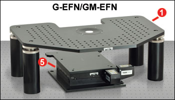 G-EFN and GM-EFN
