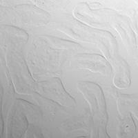 Brightfield Microscopy Mouse Kidney Cells