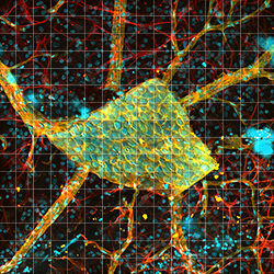 Large-Area Mosaic Tiled Image of a Rat Retina